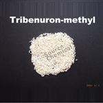 TRIBENURON-METHYL